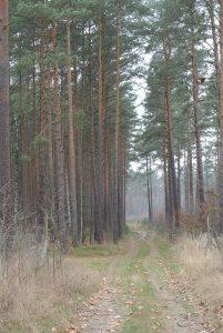 46 ha: Waldgebiet Nähe Berlin