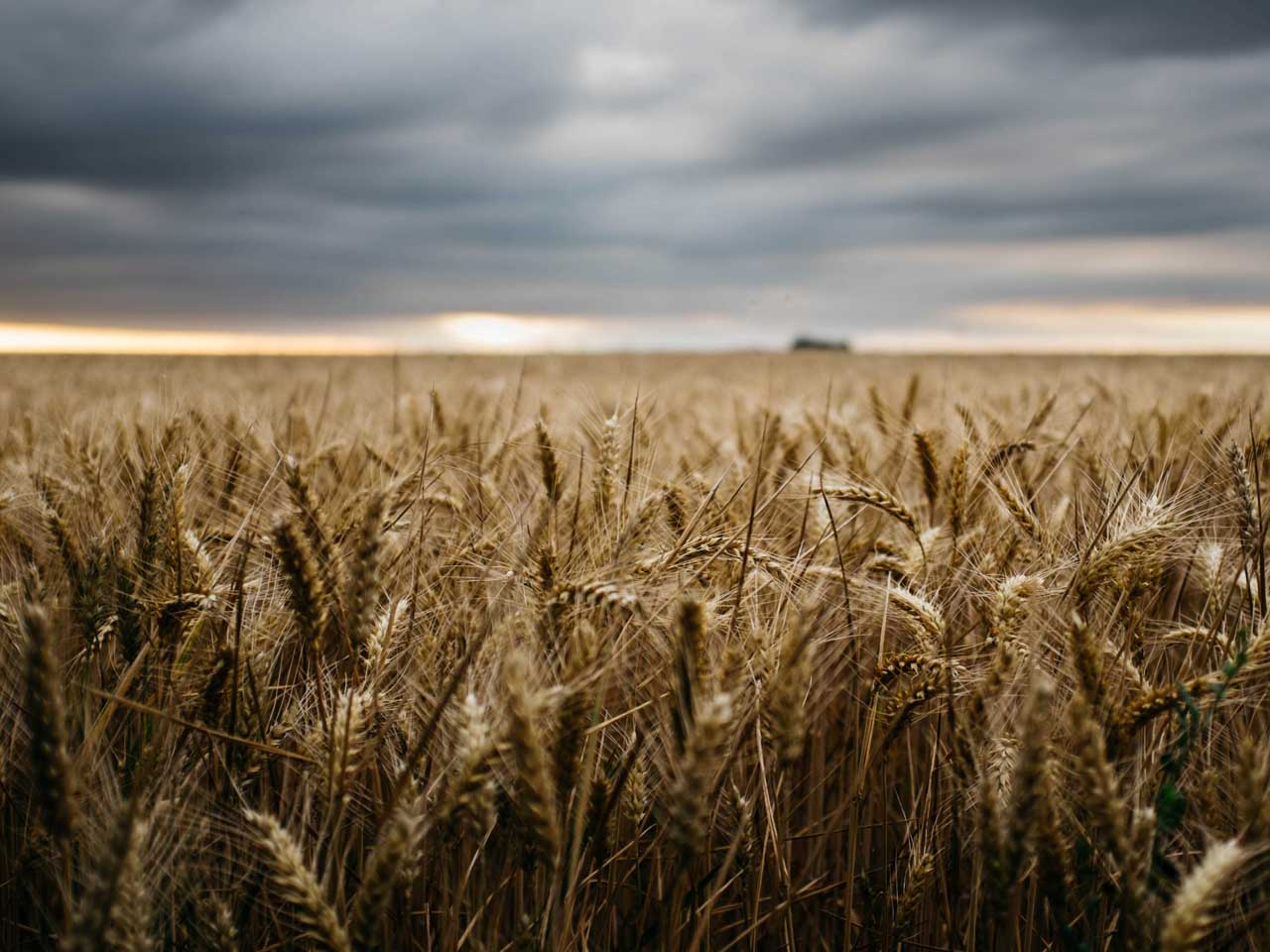 6.000 ha Ackerland in Deutschland Evers Landmakler