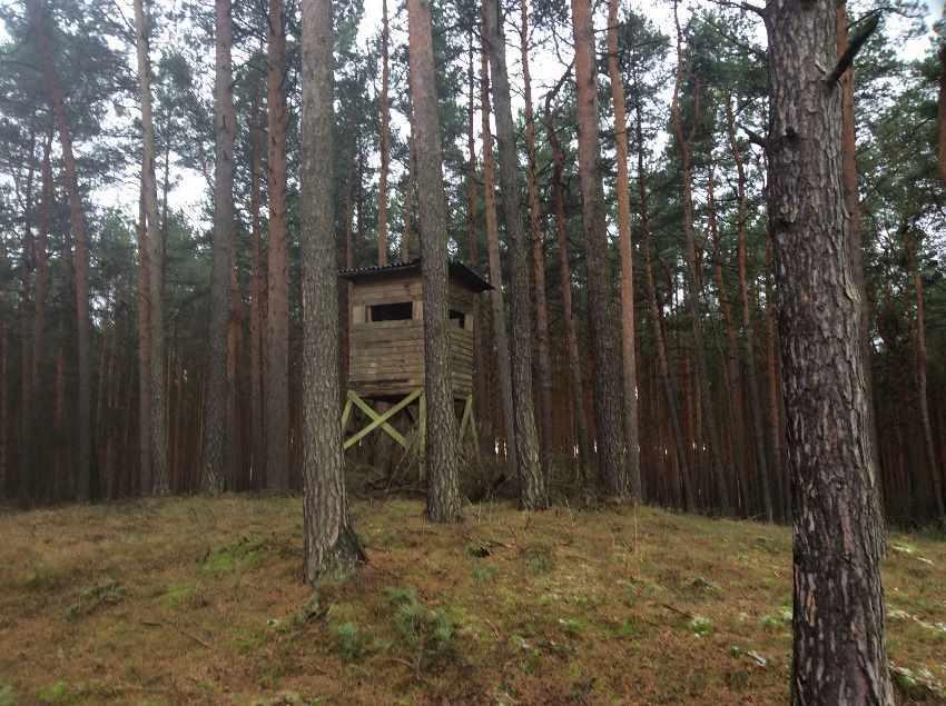 Kapitalanlage Eigenjagd Brandenburg Evers Landmakler