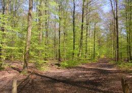 Forst kaufen Forst und Hochwildjagd in Deutschland Evers Landmakler