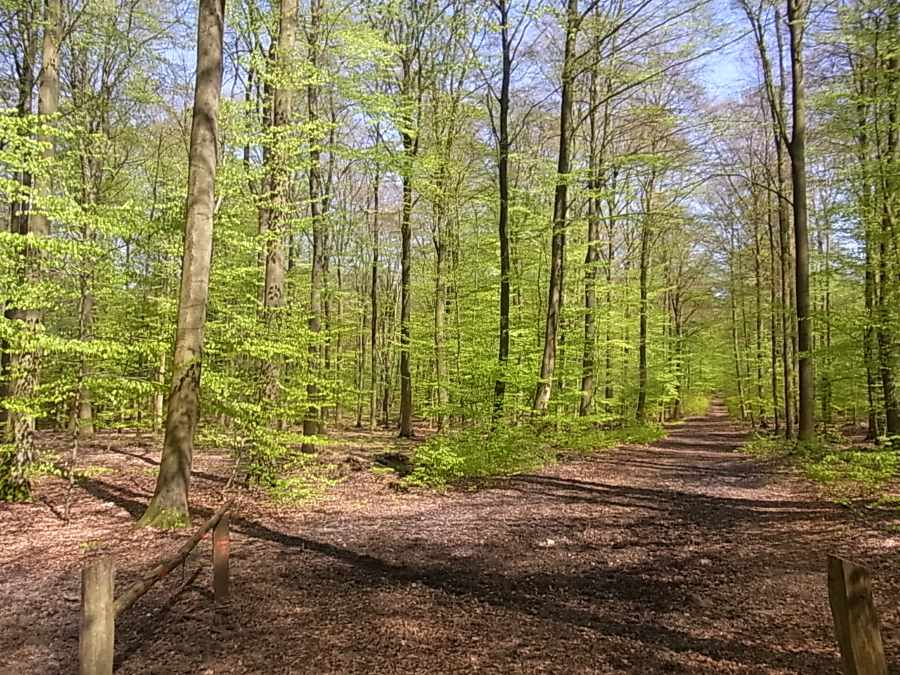 600 ha Forst Hochwildjagd Evers Landmakler