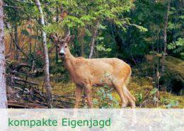 Reizvoller Waldbesitz mit Eigenjagd im nördlichen Sachsen