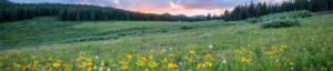 datenschutz evers landmakler titelgrafik wald wiese gruenland