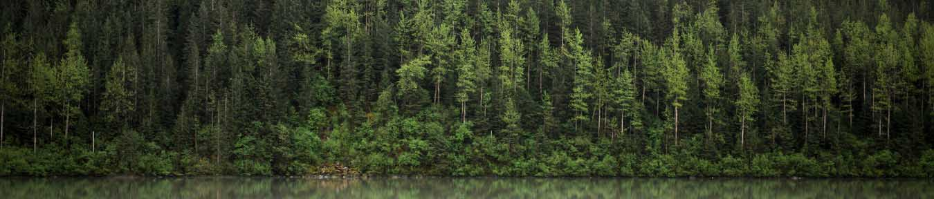 impressum titelbild wald evers landmakler