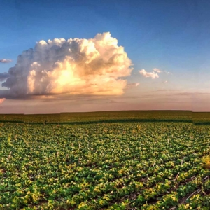 evers landmakler wald feld land acker agraobjekte