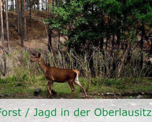 Waldbesitz mit Eigenjagd in Sachsen