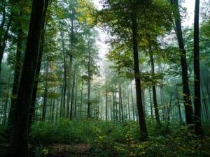 Objekt 5167 Forst in Ostthüringen Evers Landmakler